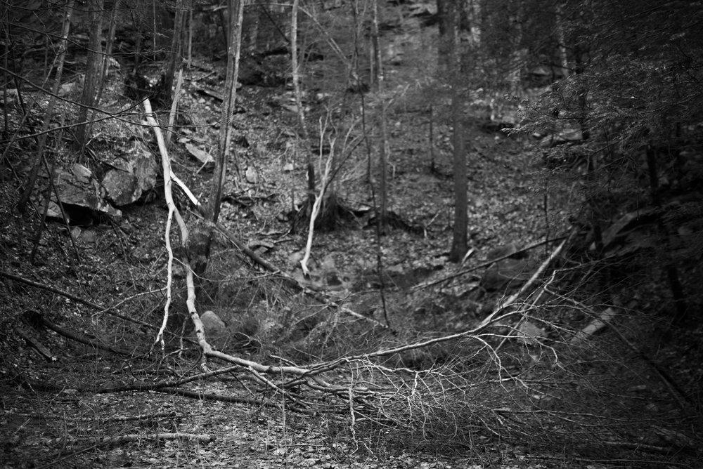 tree falling down cliff.jpg
