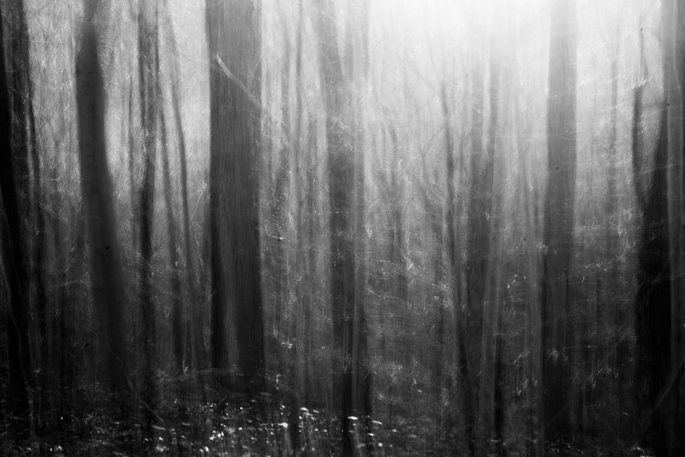 tangled forest of the mind.jpg