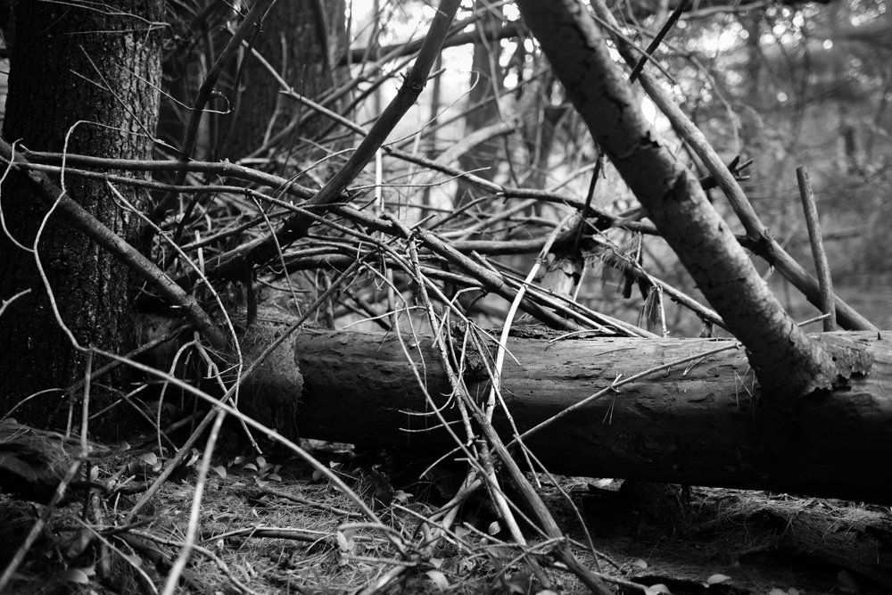 forest lines project 1.jpg