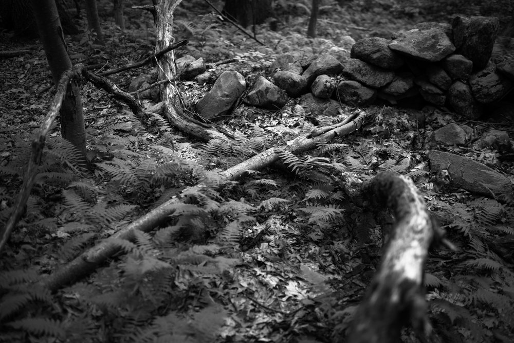 forest lines project 2.jpg