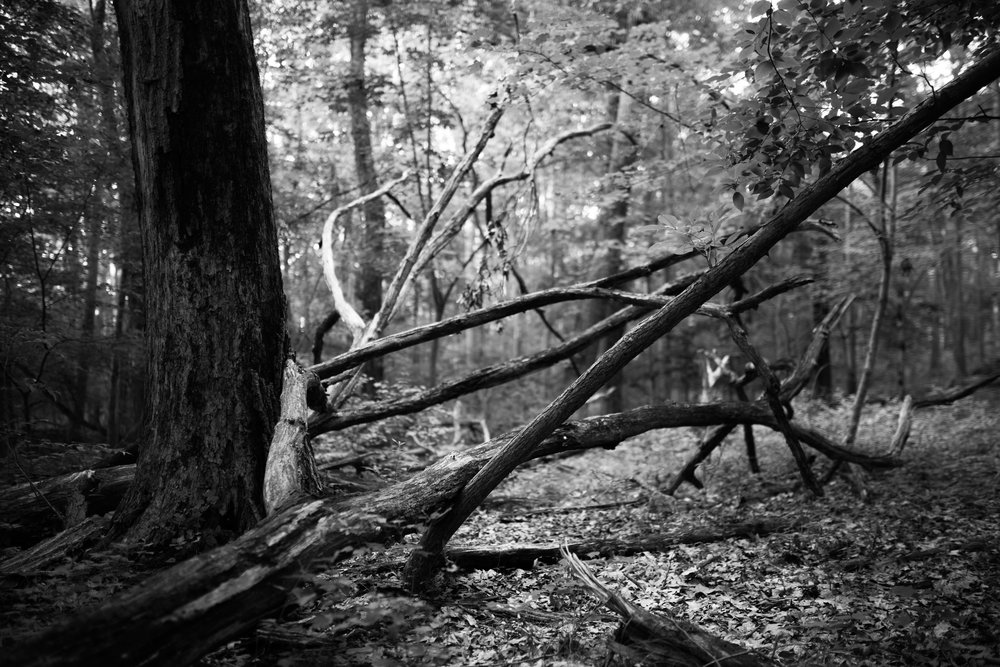 forest lines project 3.jpg