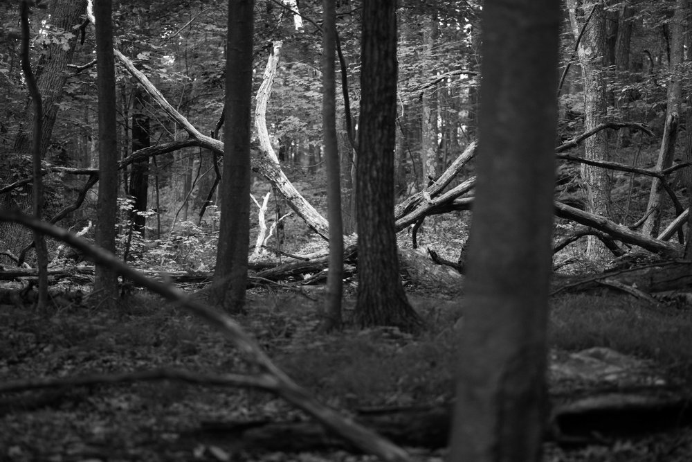 forest lines project 5.jpg