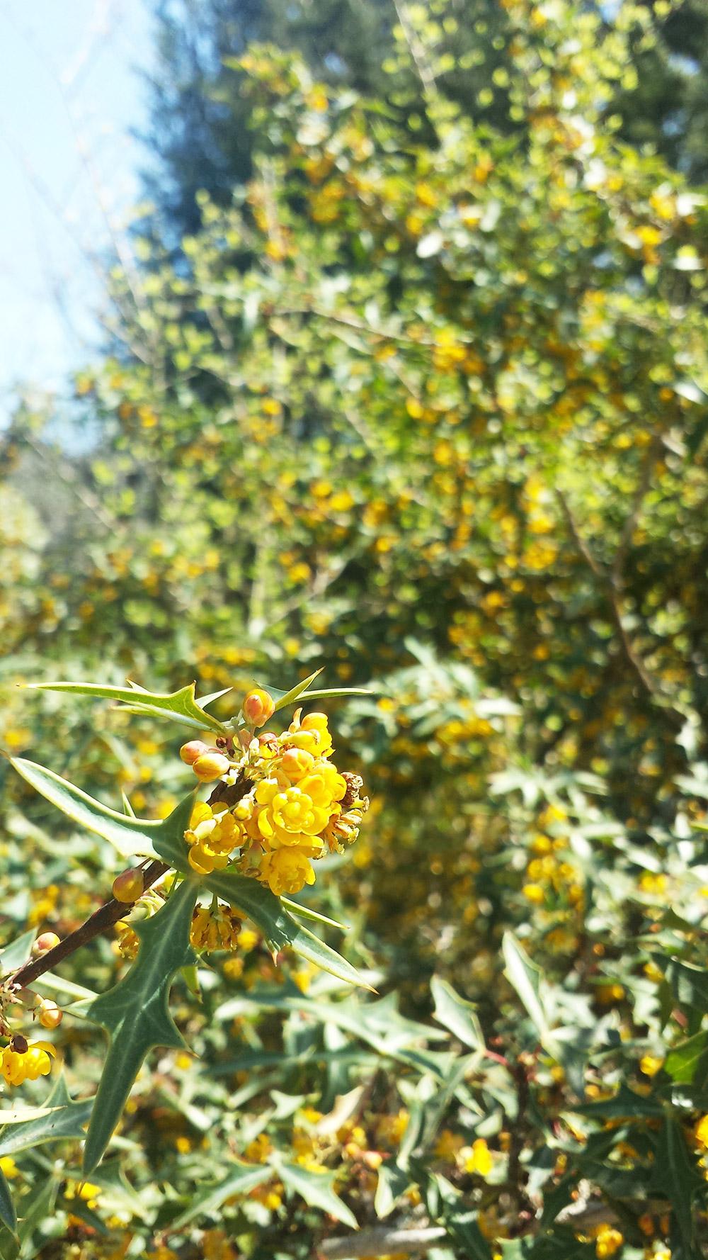 tiny-yellow-flowers.jpg