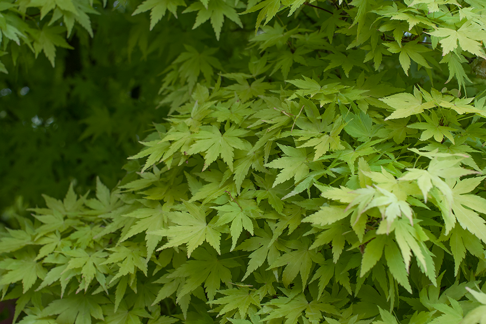 green-leaves.png