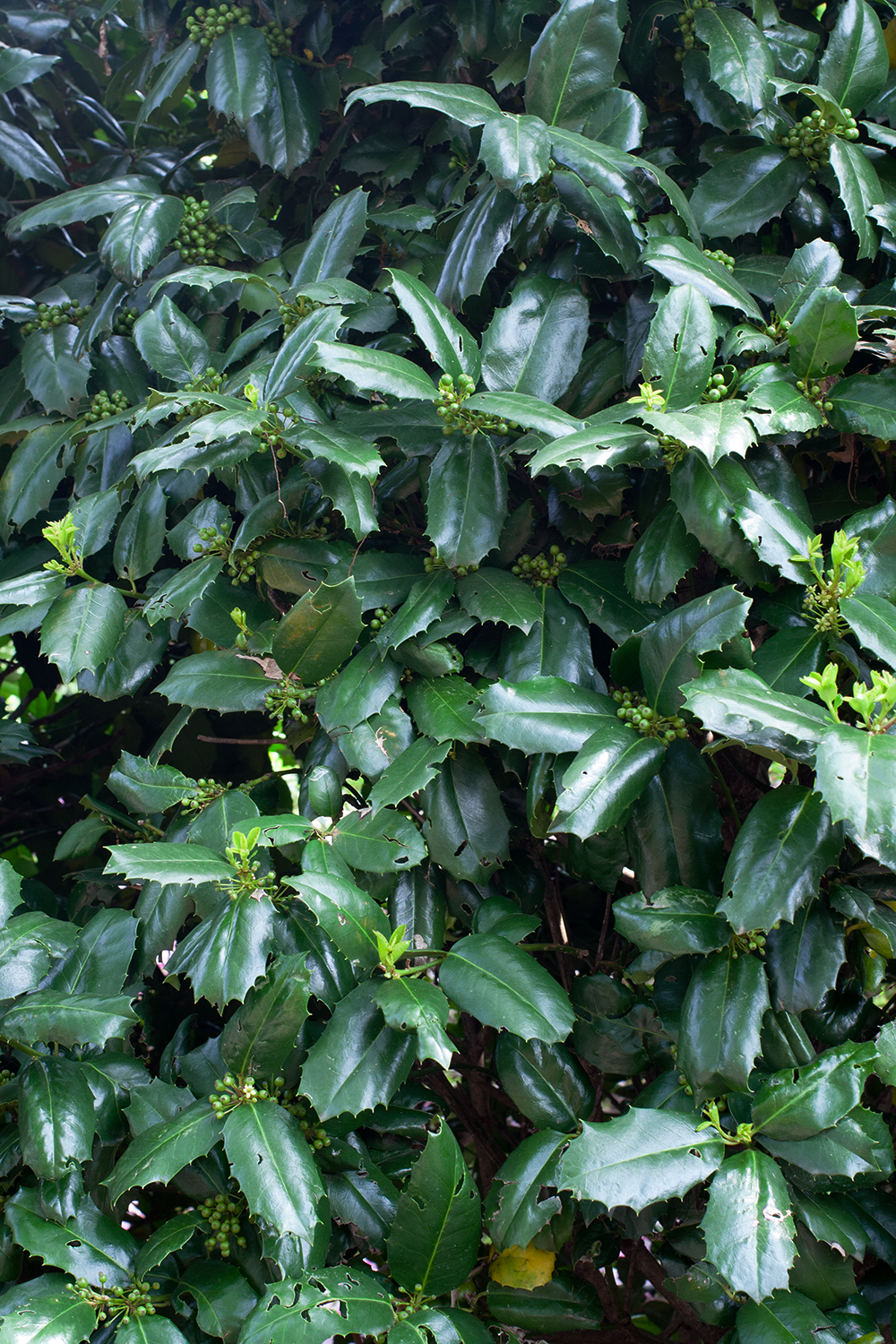 darkgreen-leaves.png