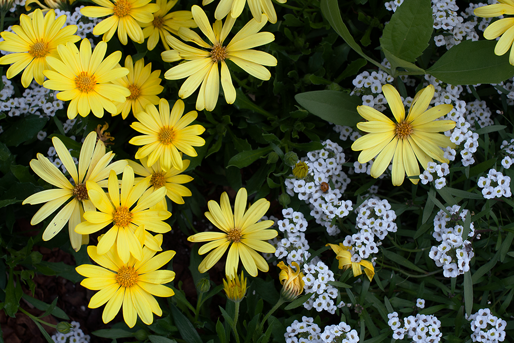 yellow-flowers_tiny-white-flowers.png