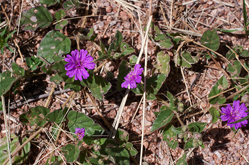 tiny-purple-flowers.png