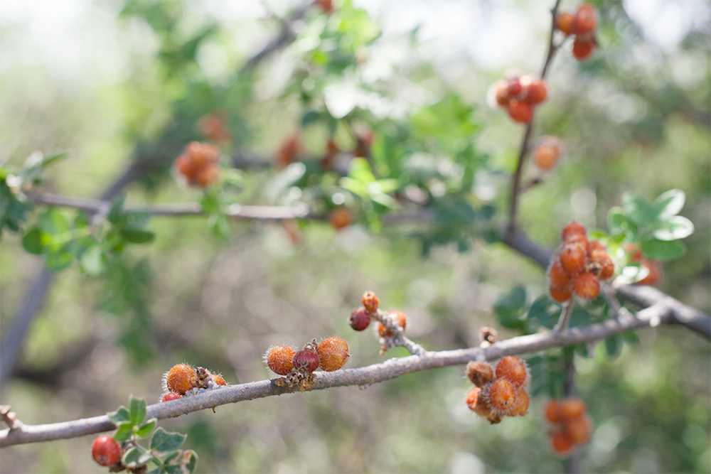 red-and-orange-tree-branch.png