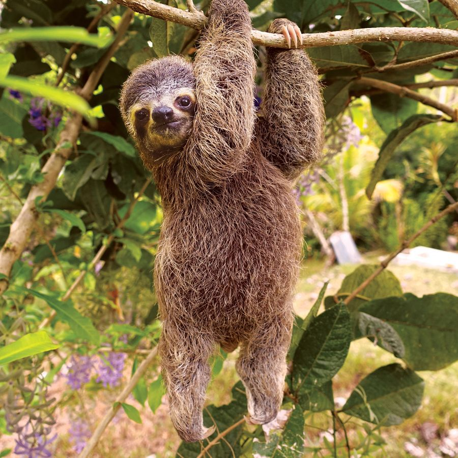 I'd give a sloth a run for its money in the napping department.  (Photo: Life in the Sloth Lane: Slow Down and Smell the Hibiscus by Lucy Cooke (Workman). © 2018. Photos by Lucy Cooke)