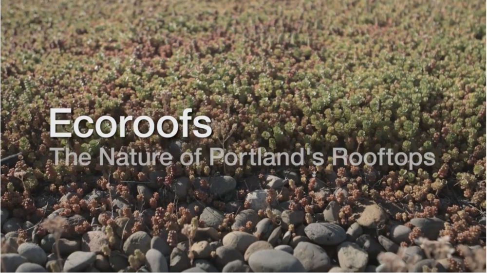 ECOROOFS: THE NATURE OF PORTLAND'S ROOFTOPS Elizabeth Hart, GreenUp LLC President, was interviewed for the City of Portland's video on Ecoroofs.  - Produced by the City of Portland Environmental Services, 2013