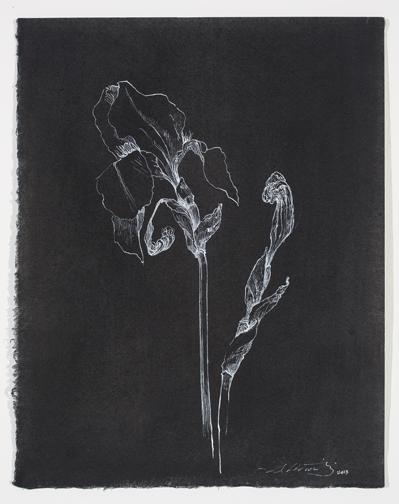 Iridaceae1_12x9.5.jpg