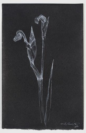 Iridaceae2_10.75x7.jpg