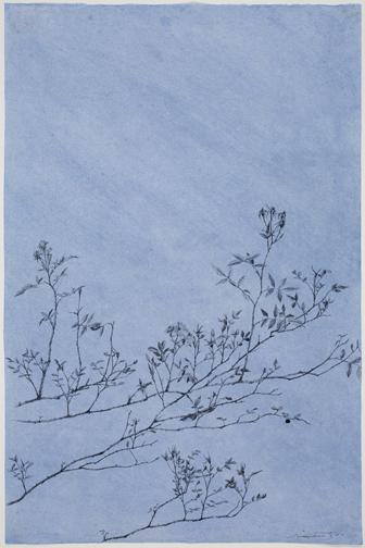 Rose-Blue38x25.jpg