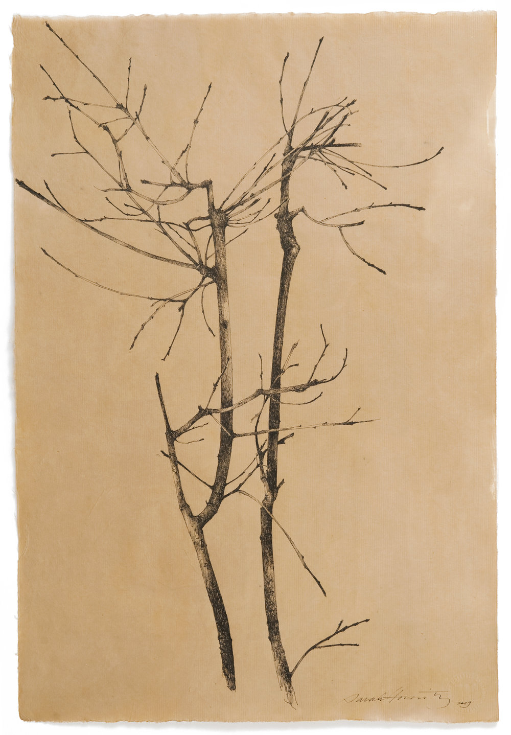 Quercus_I.jpg
