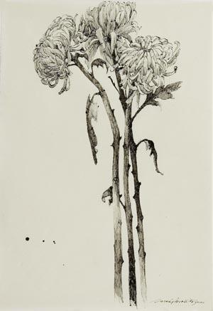 Green Chrysanthemum III.jpg