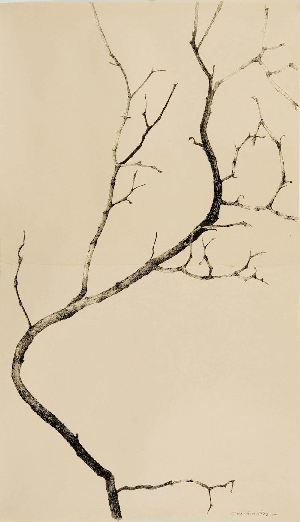 Magnolia Torinoko II.jpg