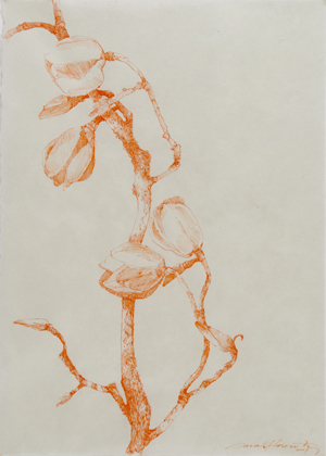orangemagnolia.jpg