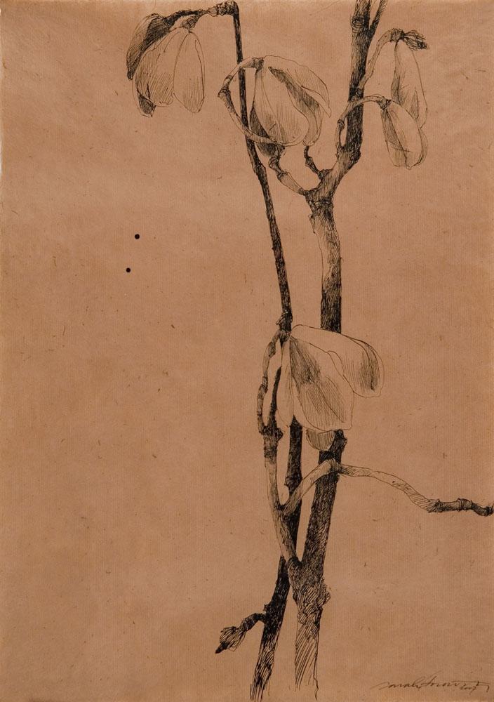 Spoon Magnolia I.jpg