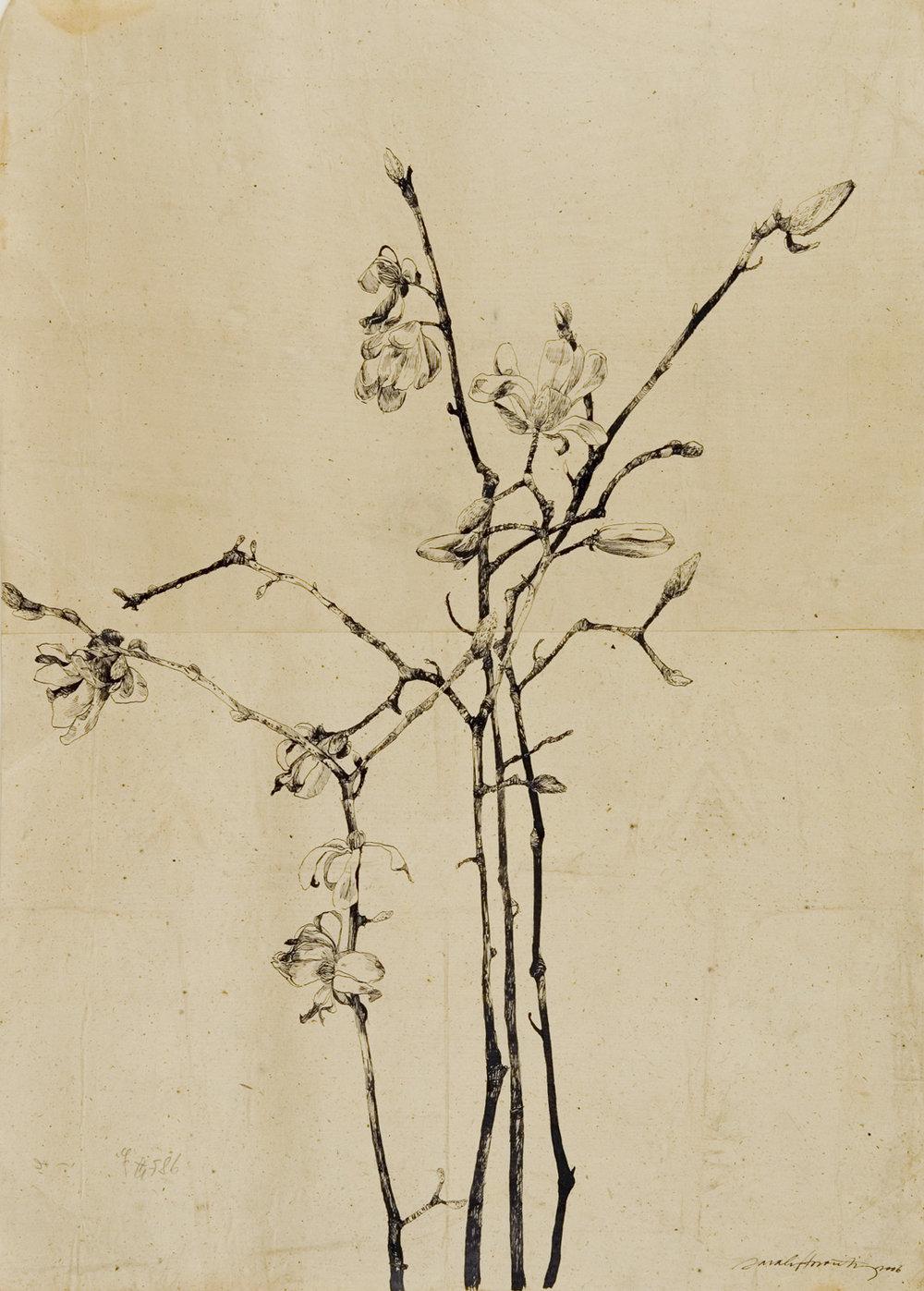 31x22_Flowering Magnolia II.jpg