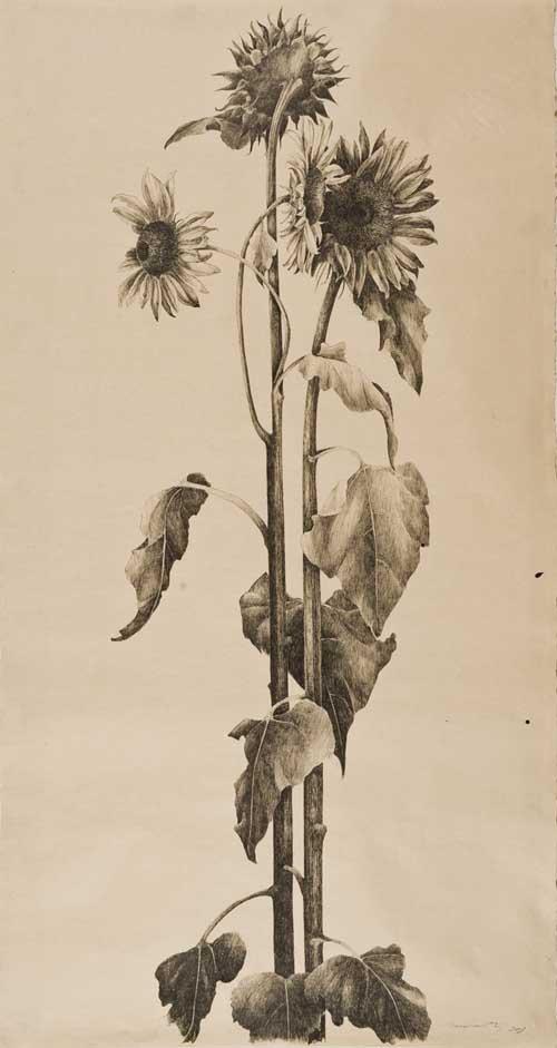 Mid Day Sunflowers.jpg