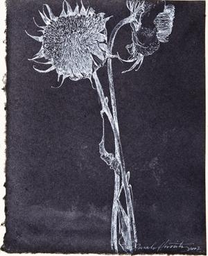 Sunflower Ghost_1.jpg
