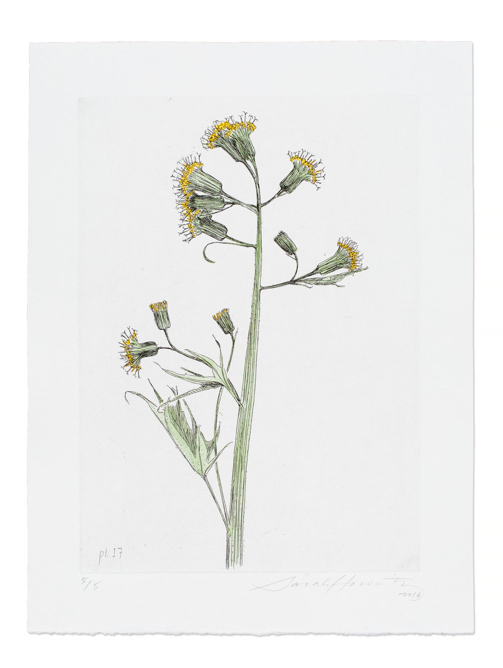 Wildflower Etchings
