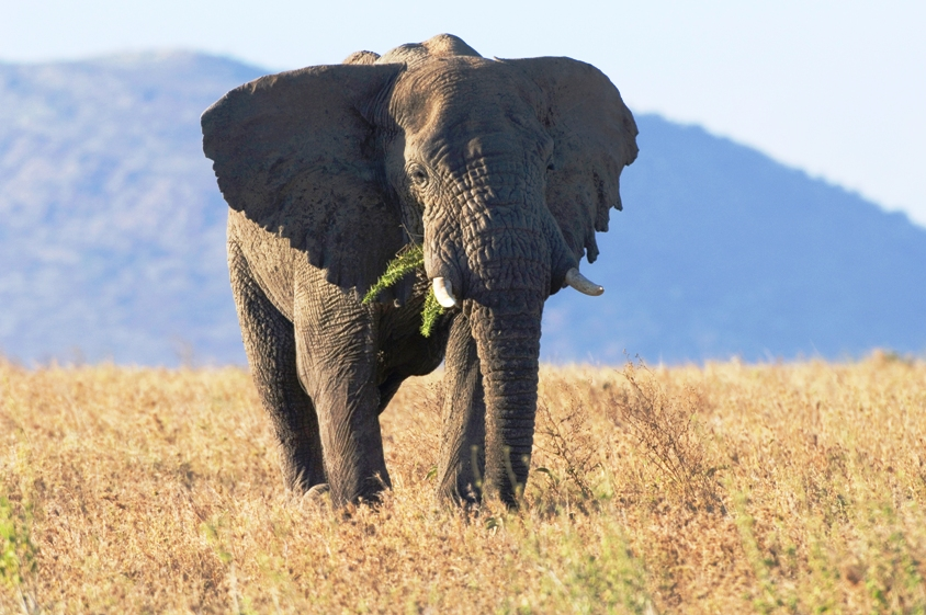 Ngorongoro3.jpg