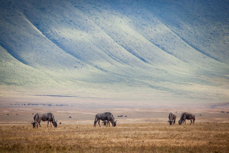 NgorongoroCraterTanzania Horizon Safaris.jpg