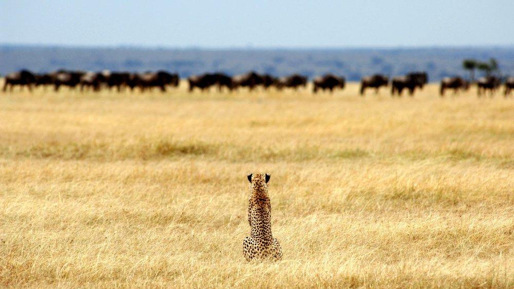 Serengeti Tanzania Horizon Safaris.jpg