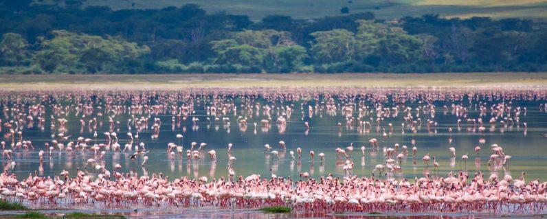 Lake Manyara 3 Tanzania Horizon safaris.jpg