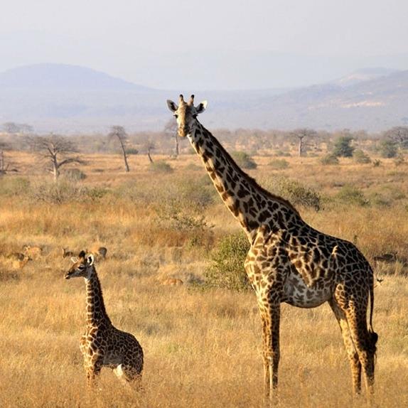 tarangire Tanzania Horizon Safaris
