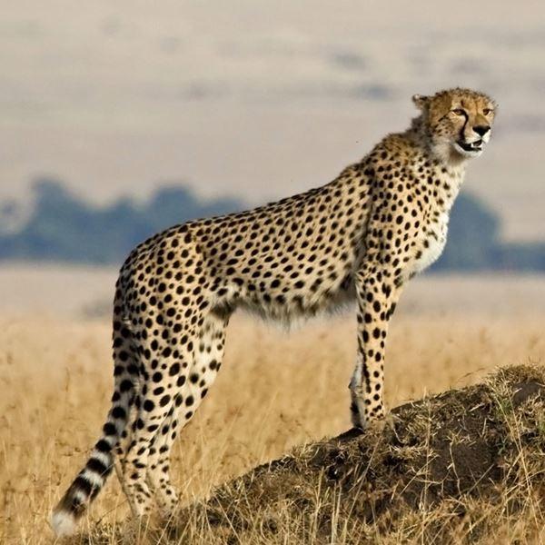 Serengeti Tanzania Horizon Safaris