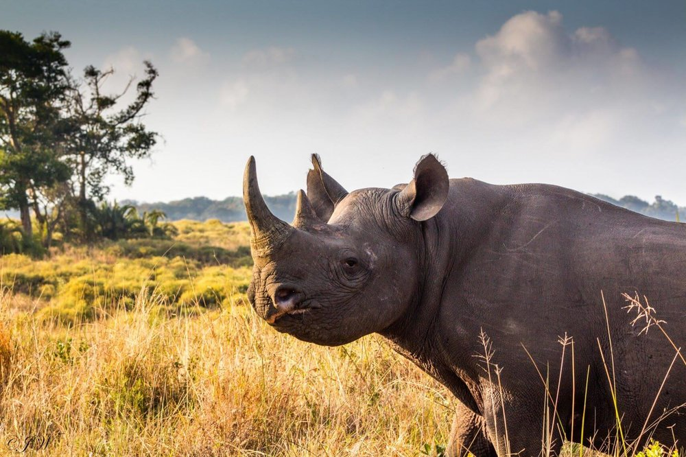 Serengeti Rhino1 Tanzania Horizon Safaris
