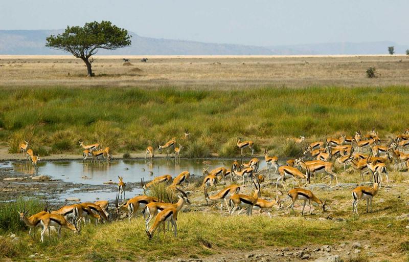 tarangire Tanzania Horizon Safaris.jpg
