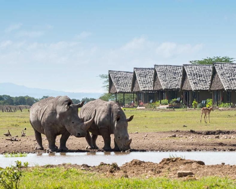 Selous-Game-Reserve-Tanuga-Safaris-5.jpg