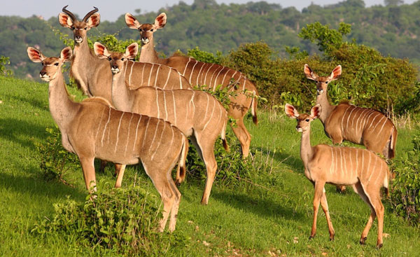 ruaha-national-park Tanzania horizon safaris.jpg