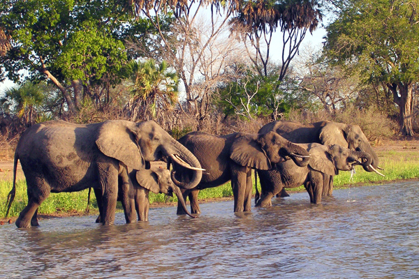Selous-Game-Reserve-Tanzania horizon-Safaris-4.jpg