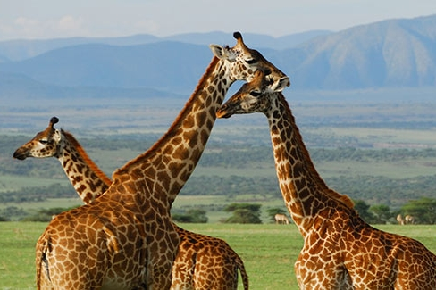 katavi-national-park-ker-downey-tanzania-wildlife.jpg
