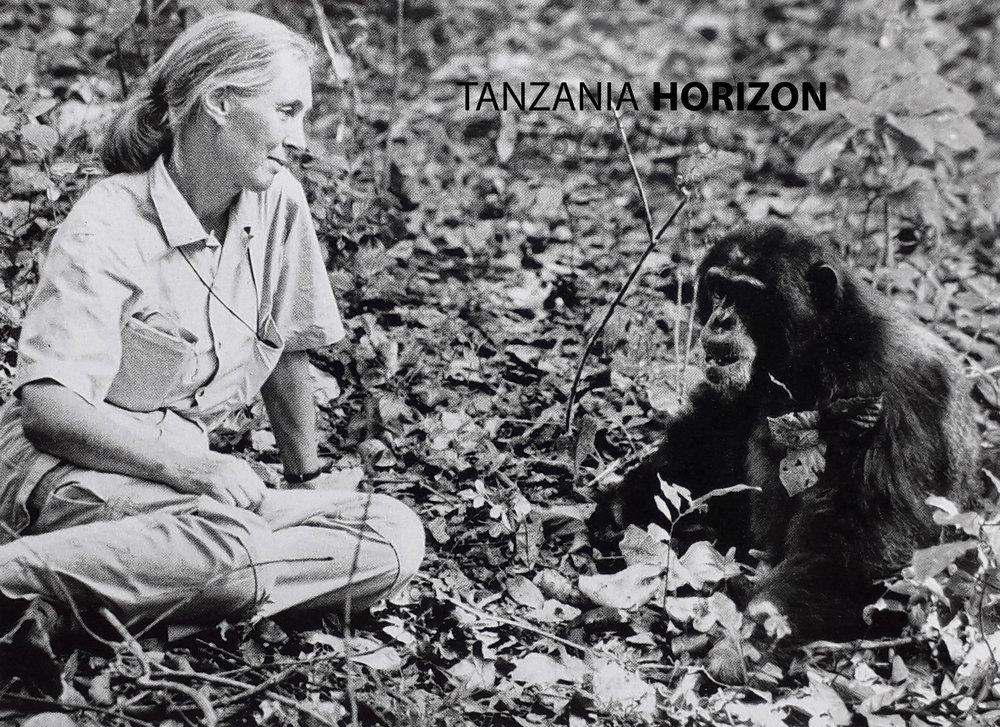 Jane Goodall in Gombe Tanzania Horizon Safaris.jpg