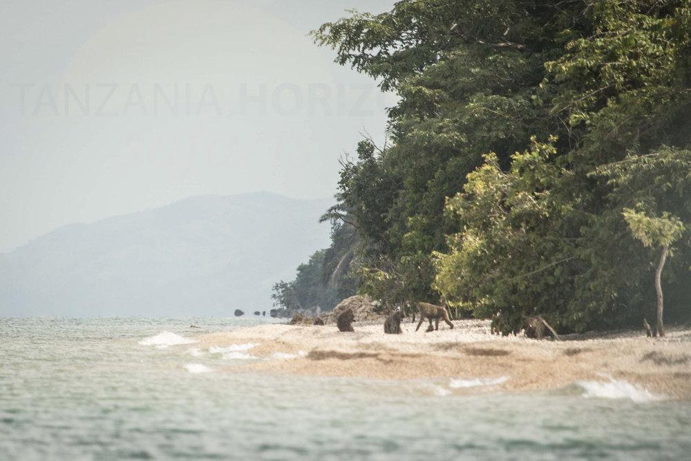 Tanzania Horizon Safaris Gombe National Park (10).JPG