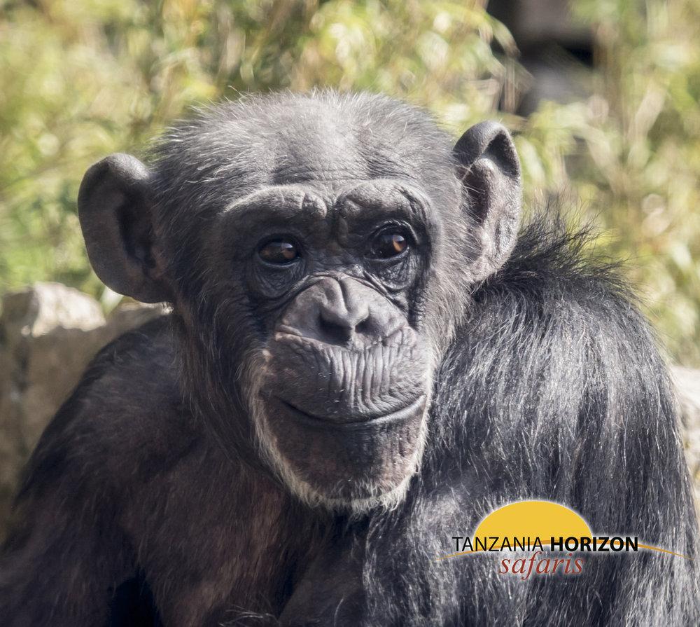 Tanzania Horizon Safaris Gombe National Park E.jpg