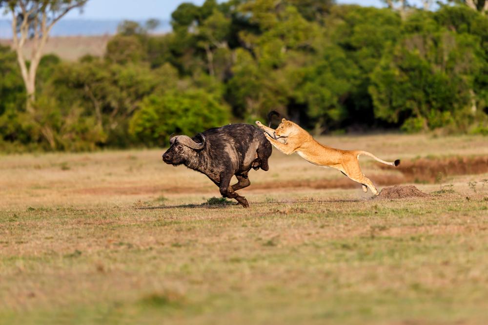 masai mara 2.jpg