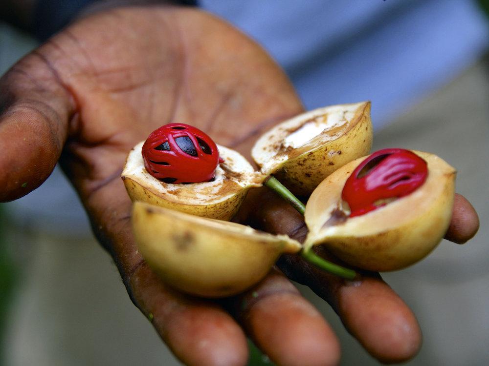 Zanzibar Spice Tour -