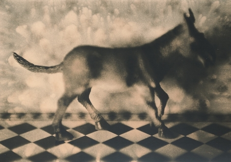 jo_stapleton 'a horse in the house' (lith print).jpg