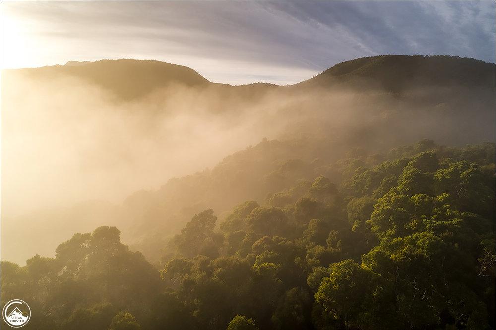 Drohnenaufnahme des Regenwalds beim Morgenlicht