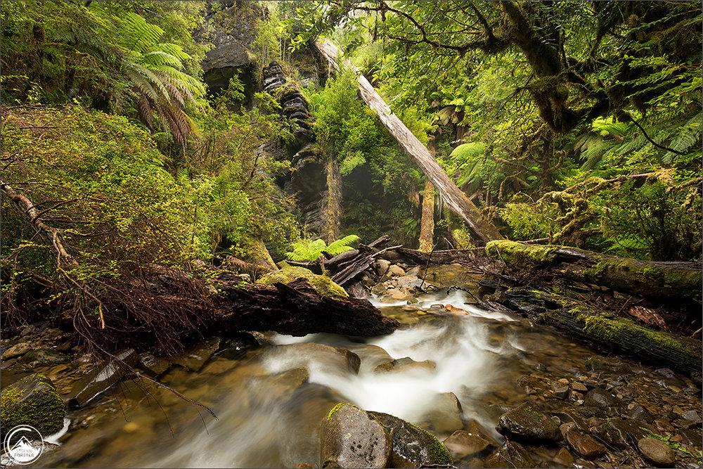 Sehr abgelegener Höhleneingang inmitten des Urwalds von Tasmanien