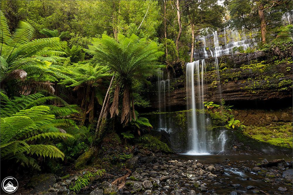 Russel Falls, leider mit sehr wenig Wasser am Mount Field NP