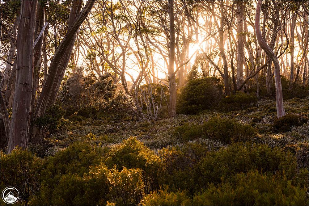 Erste Sonnenstrahlen am Mount Field