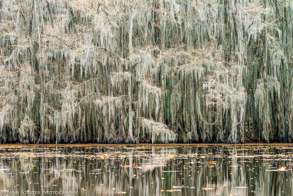 Swamps-3.jpg