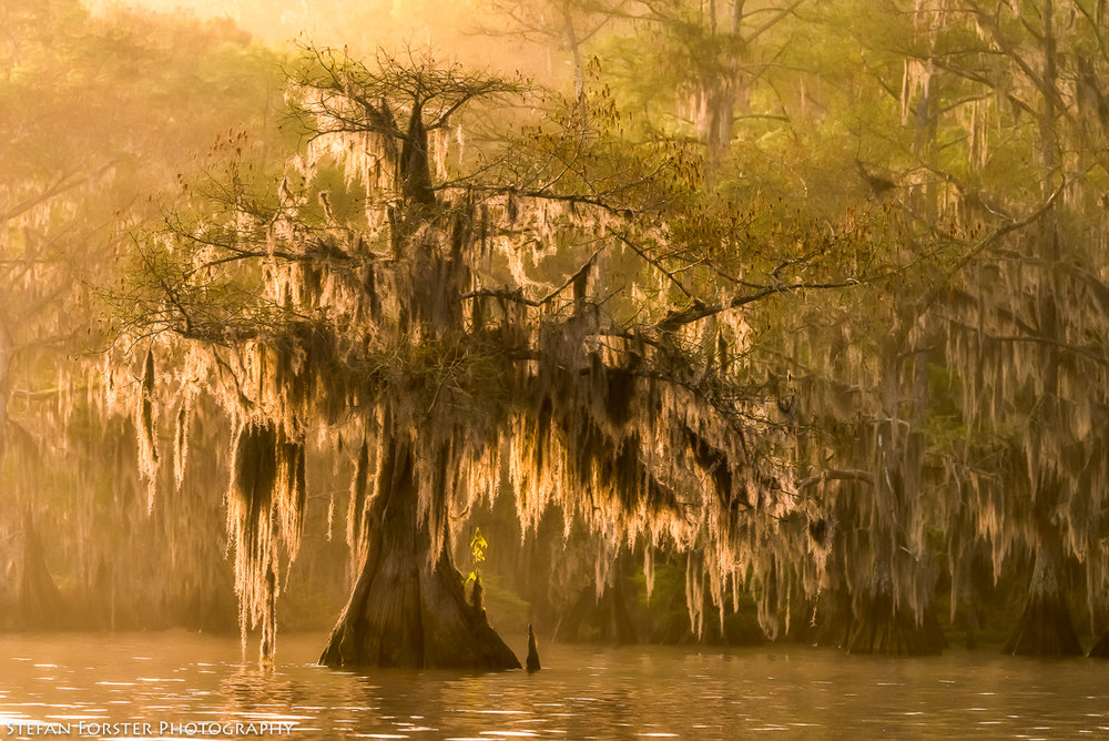 Swamps-9.jpg